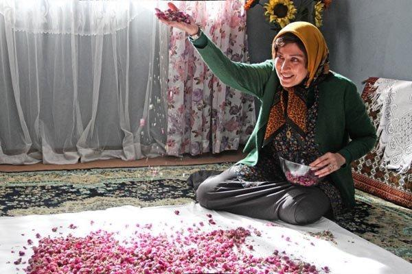 صدور پروانه نمایش خانگی برای ماجان و رفقای خوب